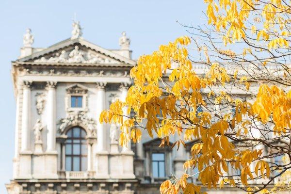 Vienna foliage, p/c @michelleamock